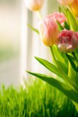 Shot of bunch of tulips standing on windowsill — Stock Photo