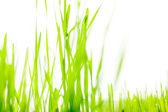 Isolated photo of fresh green grass — Stock Photo