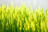 Foto da grama verde em dia de sol — Fotografia Stock