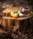 Colorful easter eggs lying on wooden stump — Stock Photo