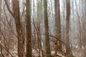 Misted autumn forest — Stock Photo