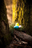 Photo of colored eggs hidden under tree at forest — Stock Photo