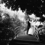 Bride and groom kissing on bridge under big tree — Stock Photo