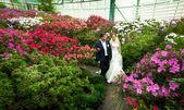 Małżeństwo spaceru wśród drzew pokryte kwiatami — Zdjęcie stockowe