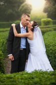 Bride kissing groom at garden — Stock Photo