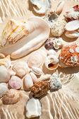 Photo of lots of seashells lying underwater — Stock Photo