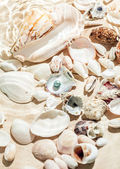 Seashells and black pearl lying on bottom of sea — Stock Photo