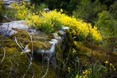 Photo of rapeseed and moss growing on rocks — Stock Photo