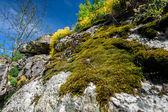 Photo of moss growing on mountain — Stock Photo