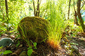 Big rock with grass growing around at forest — Stock Photo
