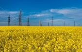 Foto de torres elétricas de colza contra o céu azul — Fotografia Stock
