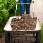 Photo of woman holding wheelbarrow with soil — Stock Photo #46566529