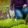 Photo of woman working ar garden on salad bed — Stock Photo #46566763