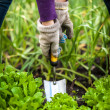 Woman in gloves working with small shovel on garden bed — Stock Photo #46566833