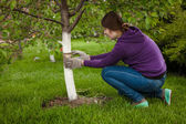Woman tying band around tree to heal bark — Stock Photo