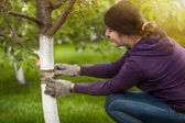 Young woman tying band on tree bark to prevent insects — Stock Photo