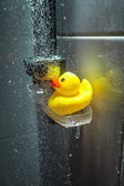 Photo of yellow rubber duck under douche — Stock Photo