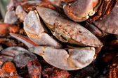 Fresh black crabs on kitchen — Stock Photo