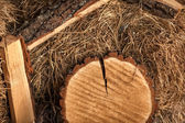 Photo of tree trunks lying on hay — Stock Photo