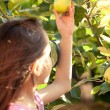 Cute girl picking green apple from tree at garden — Stock Photo #50944395