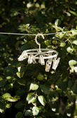 White clothespins hanging on rope at garden — Stock Photo