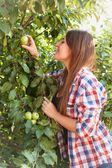 Portrait of beautiful woman picking green apple from tree — Stock Photo