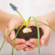 Young Plant in Caring Hands — Stock Photo