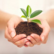 Handful of Soil with Young Plant Growing — Stock Photo #28331377