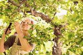 Elder woman gardening in her farm — Stock Photo