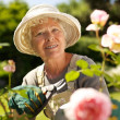 Senior woman working in the garden — Stock Photo