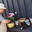 Active senior woman planting new plants in terracotta pots — Stock Photo #41484839