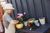 Active senior woman planting new plants in terracotta pots — Stock Photo