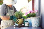 Senior gardener potting young plants in pots — Stock Photo