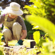 Senior female gardener working in her garden — Stock Photo #42329837
