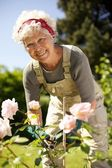 Elderly woman gardening in backyard — Stock Photo