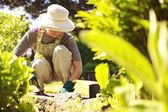 Senior female gardener working in her garden — Stock Photo