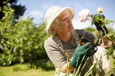 Senior woman checking flowers in garden — Stock Photo