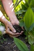 Senior female hands giving fertilizers to the plants — Photo