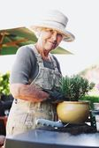 Happy senior female gardener potting new young plant — Stock Photo