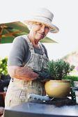 Happy senior female gardener potting new young plant — Stock Photo