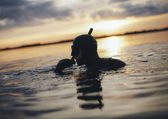 Young adult snorkeling in sea during sunset — Stock Photo