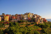 Close picture of Corniglia — Stock Photo