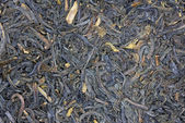 Macro of dried tea — Stock Photo