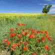 Colorful field — Stock Photo #12661956