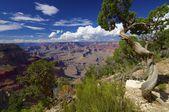 Grand canyon — Stock fotografie