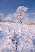 Tree in snow — Stock Photo