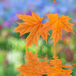 Orange autumn leaves — Stock Photo #13200625