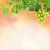 Fondo con uvas verdes — Foto de Stock