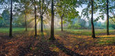 Panorama of the oak wood — Stock Photo