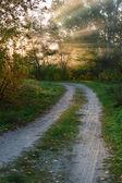 Road in autumn wood — Stock Photo